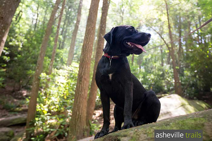 Hiking gear list for dogs: our favorite trail-tested leashes, collars, bowls and more