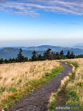 Hike the Appalachian Trail at Roan Mountain in NC