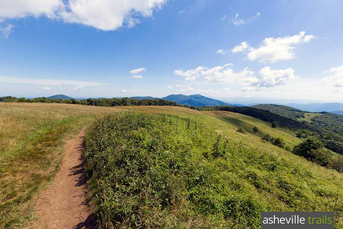 Hike the Appalachian Trail to Max Patch, a beautiful grassy bald covered wildflowers