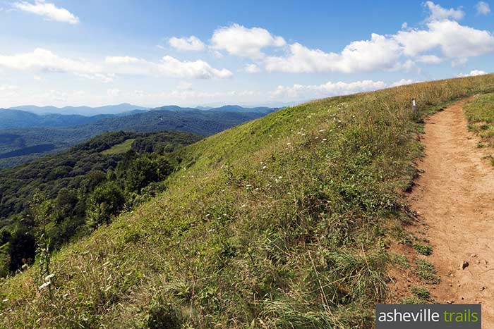 Max patch bald trail
