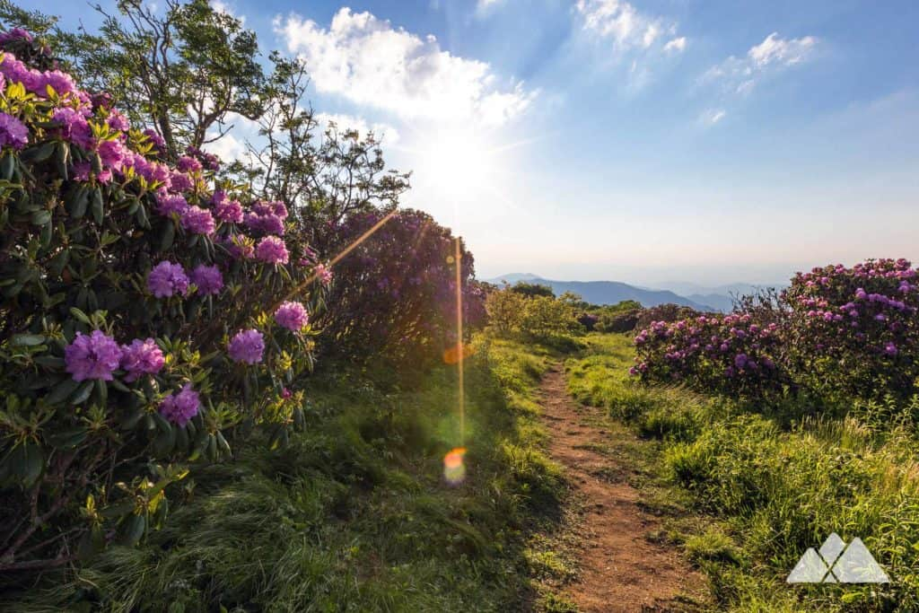 Explore the exceptionally beautiful Craggy Gardens near Asheville, NC, hiking through a beautiful blooming high-elevation forest of rhododendron