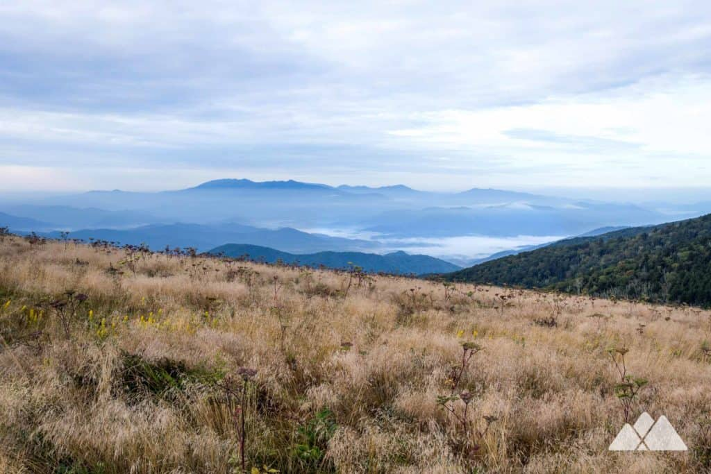 Hike the Appalachian Trail at Roan Mountain, rolling over grassy balds to Grassy Ridge Bald from Carvers Gap