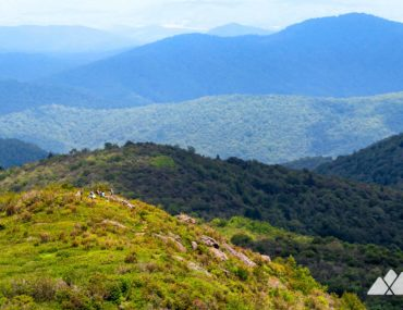 Black Balsam Knob and Tennent Mountain Loop