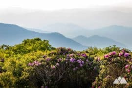 Craggy Gardens on the Blue Ridge Parkway