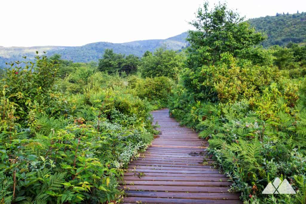 Graveyard Fields Loop Trail